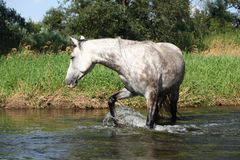Nice mare bathing in the river Royalty Free Stock Photography