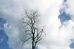 Nice massive clouds with dried tree Stock Image