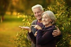 Nice mature couple Royalty Free Stock Photo