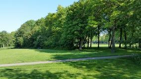 Nice mejade gräs Arkivbild