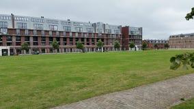 Nice mejade gräs Fotografering för Bildbyråer