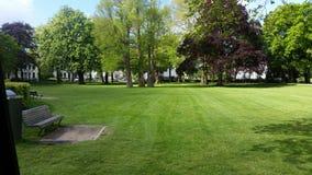 Nice mejade gräs Royaltyfria Bilder