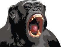 Nice monkey Stock Photo
