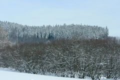 Nice mountain forest in winter Royalty Free Stock Photos
