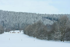 Nice mountain forest in winter Stock Photos
