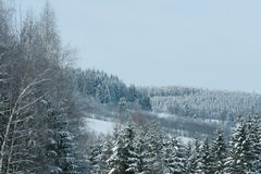 Nice mountain forest in winter Stock Image