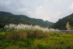 Nice Mountain Landscape with grass meadow from Taiwan Stock Images