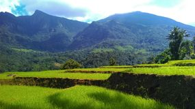 Nice mountain with paddy field Royalty Free Stock Photos