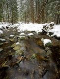 Nice mountain river in winter forest Royalty Free Stock Photography