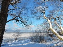 Beautiful trees near Curonian spit in winter, Lithuania Stock Photography