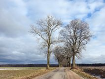 Beautiful  trees near road in winter, Lithuania Royalty Free Stock Photography
