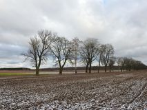 Beautiful  trees near road in winter, Lithuania Royalty Free Stock Image