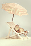 Nice older ferret portrait on beach chair in studio. Ferret portrait on beach chair in studio Stock Photography
