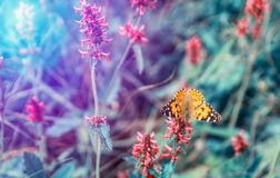 Nice orange butterfly with open wings sit on flower. Toned color photo.  stock photo