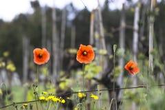 Nice orange flower Stock Photos