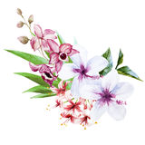 Nice orchids Royalty Free Stock Images