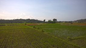 Overview of rice paddies in Bali. royalty free stock photography