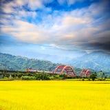 Nice paddy place Stock Photo