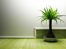 A nice palm in the dark room Royalty Free Stock Image