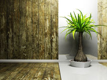 A nice palm in the dark room Royalty Free Stock Photos