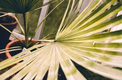 Nice palm leaf in botanical garden stock images