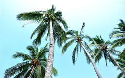 Nice palm trees against sunny sky Royalty Free Stock Image