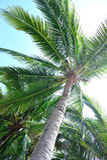 Nice palm trees against sunny sky Stock Photo