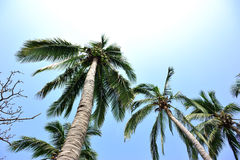 Nice palm trees against sunny sky Royalty Free Stock Photo