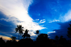 Nice palm trees in the blue sky. Coconut palm trees Royalty Free Stock Photos