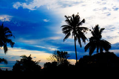 Nice palm trees in the blue sky. Coconut palm trees Stock Photos