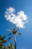 Nice palm trees in the blue sunny sky with heart cloud Stock Photo