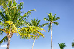 Nice palm trees in the blue sunny sky Royalty Free Stock Photo