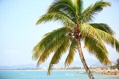 Nice palm trees at sunny seaside Royalty Free Stock Images