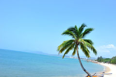 Nice palm trees at sunny seaside Royalty Free Stock Image