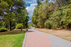 Nice park inside the city, big trees and grass cover the place with a road to make sports ina blue sky day Stock Photo