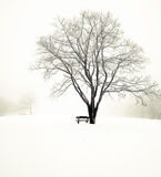 Nice park in winter Stock Photo