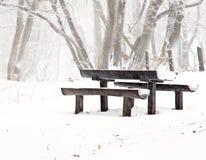 Nice park in winter Stock Image