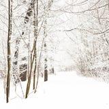 Nice park in winter Stock Photo