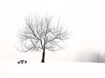 Nice park in winter. With snowfall Royalty Free Stock Photos