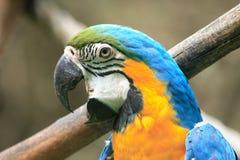 Nice parrot Royalty Free Stock Photos