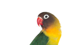 Nice parrot with red beak and yellow and green plumage Stock Image