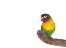 Nice parrot with red beak and yellow and green plumage Stock Photos