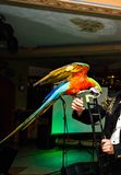 Nice parrots - Scarlet Macaw Stock Photos