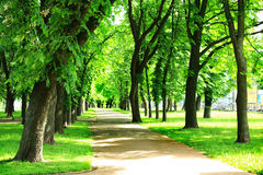 Nice path in beautiful park with many green trees Royalty Free Stock Image