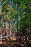 A nice path through the Forest. Hike in the quiet forest and commune with nature Stock Image