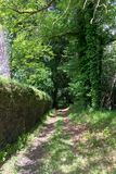 Nice path through the forest with trees and a stone wall. Galician landscape inside the Pazo de Mariñán. Nice path through the forest with trees and a royalty free stock image