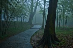 nice path meandering trough a misty forest stock photos