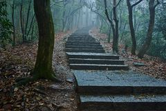 a path meandering trough a misty forest stock images