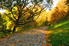 Nice pathway in the city at autumn Royalty Free Stock Photos