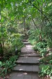 Nice pathway through the green forest, Thailand Stock Images